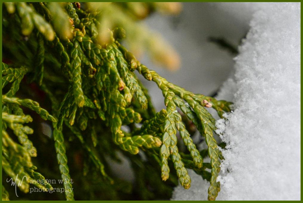 First Snow 2015c-9211