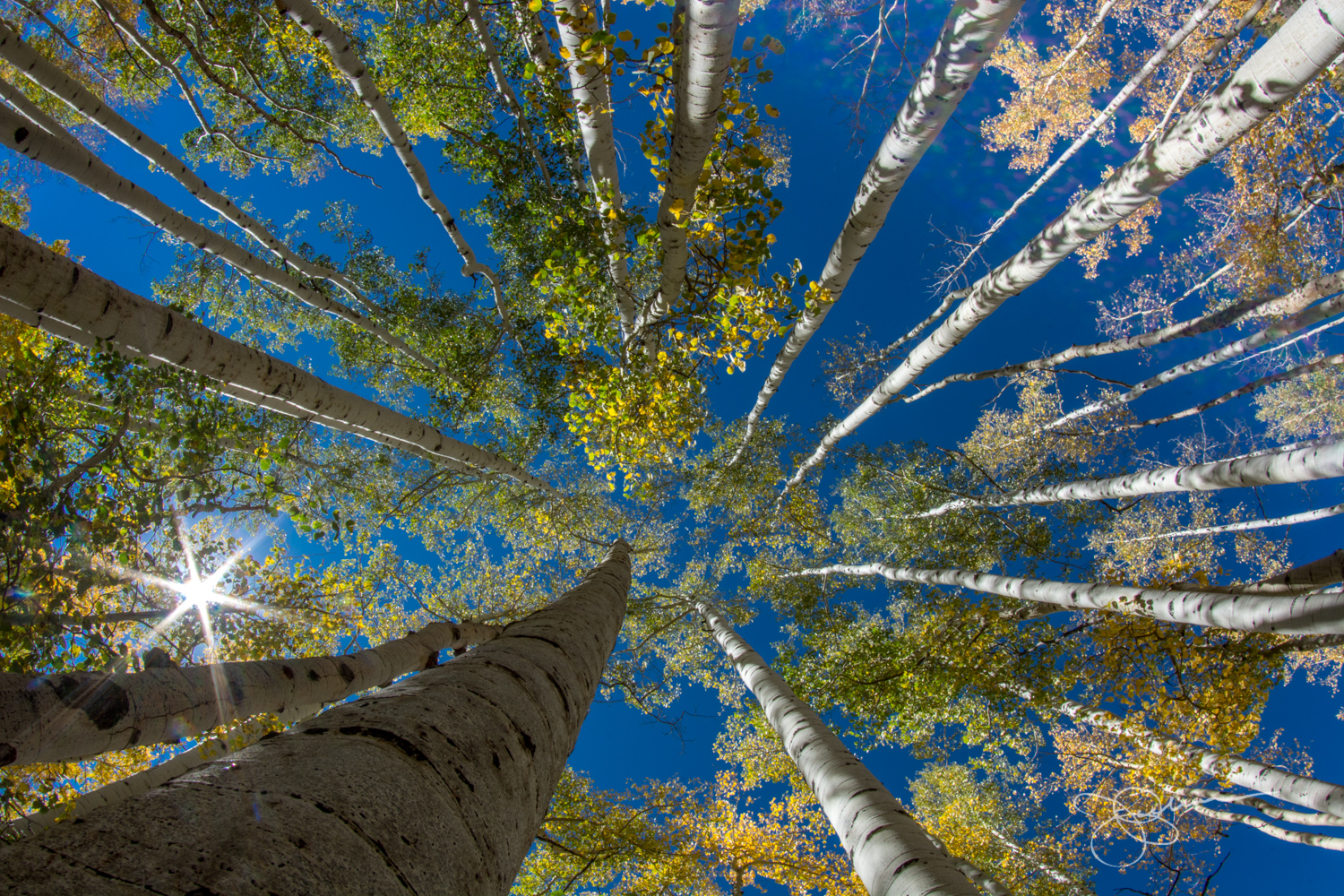 Light in Aspens