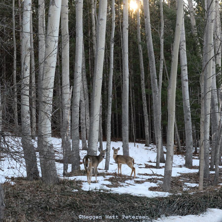 MWP 5395-deer By Route 651