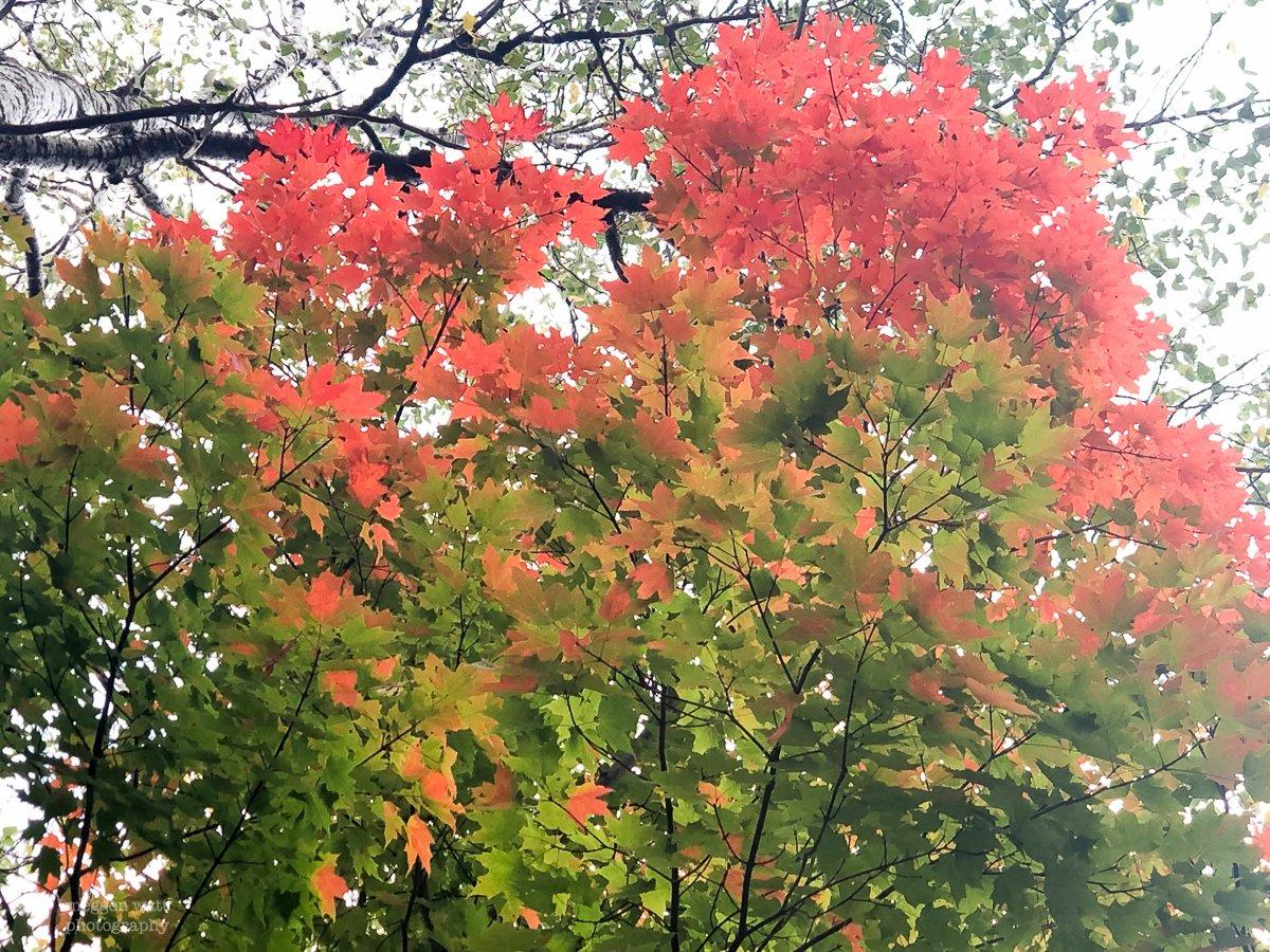 Monday Autumn-4711