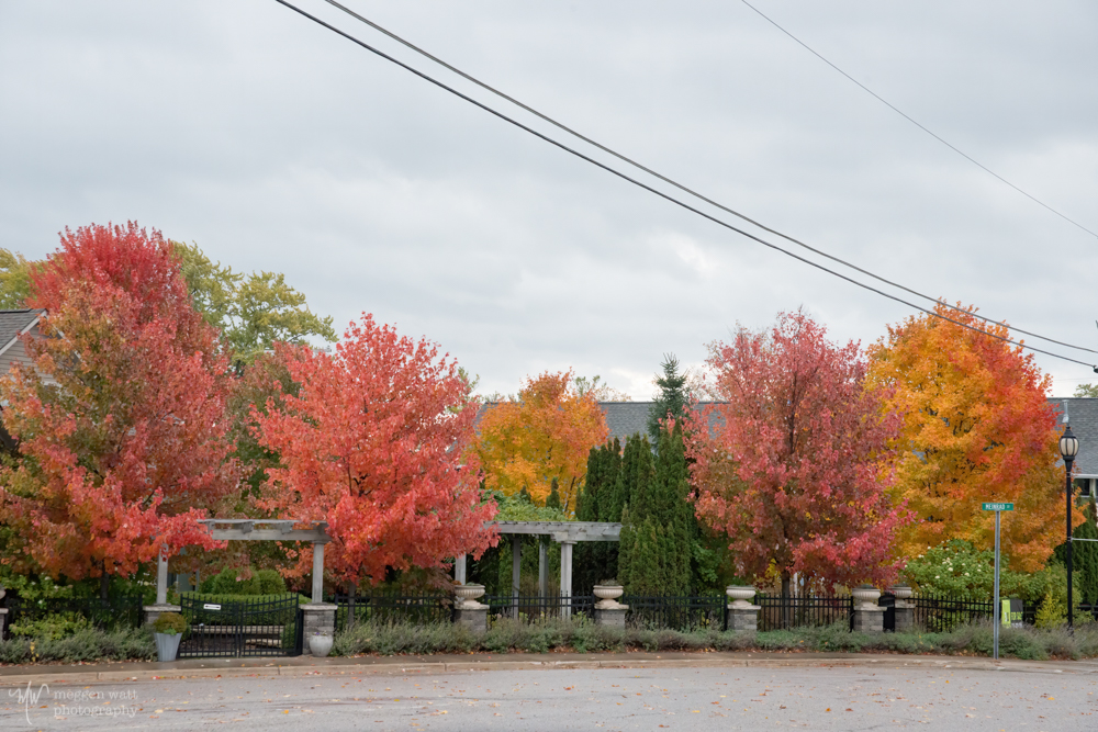 Saturated Fall Color LL-
