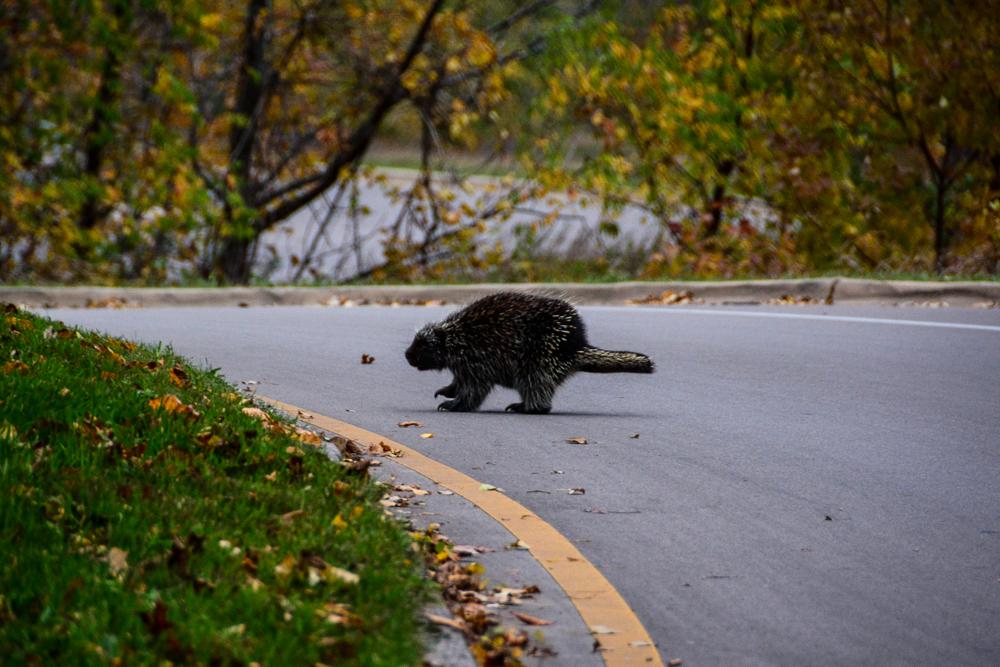 Sleeping Bear - Porcupine-5976