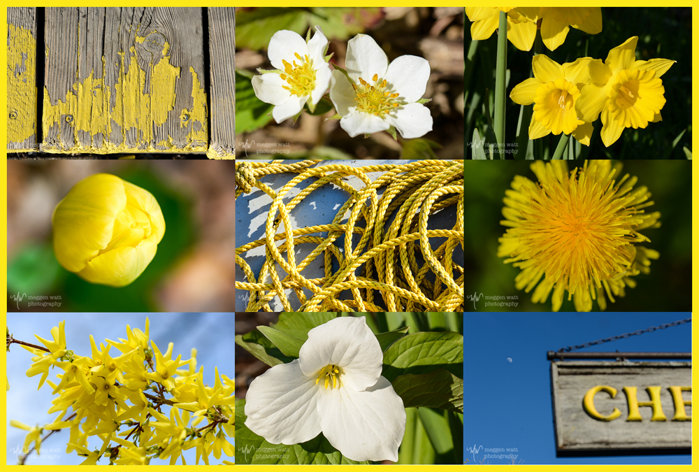 TLR-20160515-yellow Up North-3170