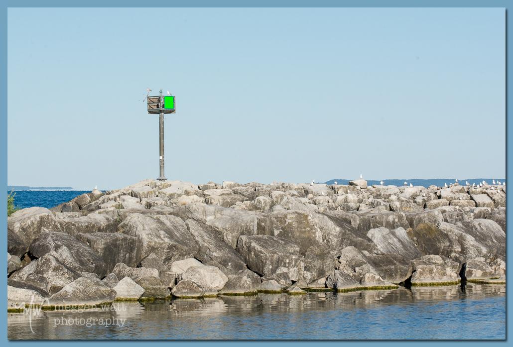 TLR-20160822-5162-Breakwater Gulls