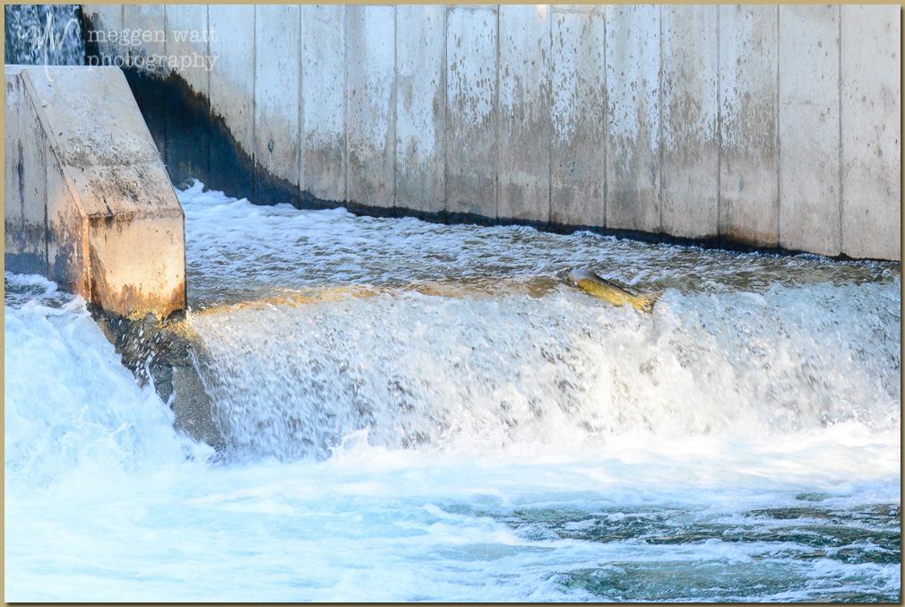 TLR-20161010-5248-salmon Jump Dam