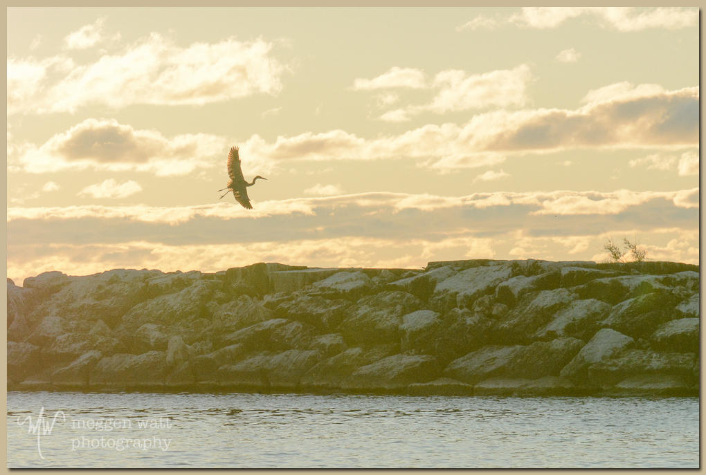 TLR-20161010-heron Breakwater Sunset-5378