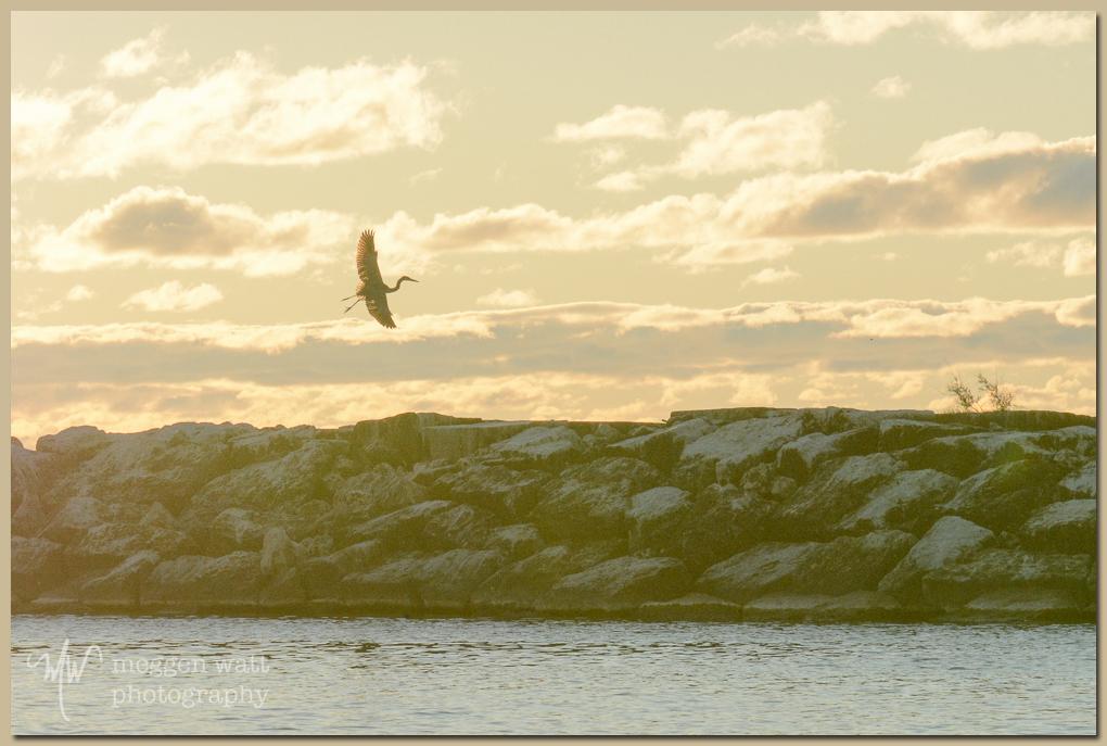 TLR-20161010-heron Breakwater Sunset-5378
