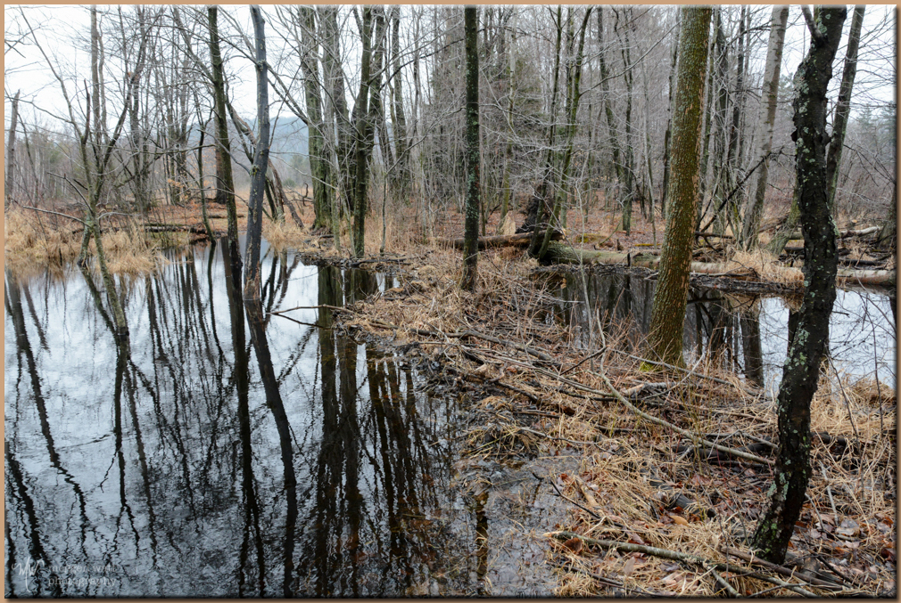 TLR-20170327-beaver Pond-8292