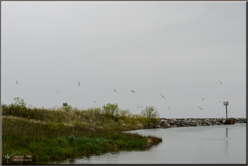 TLR-20170522 Alewives In The River-8905