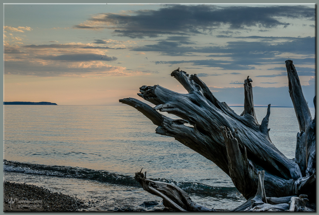 TLR-20170529-driftwood At Sunset-9150