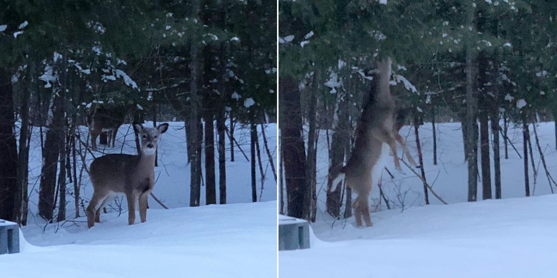 TLR-20180205 Oh Deer IMG 0042