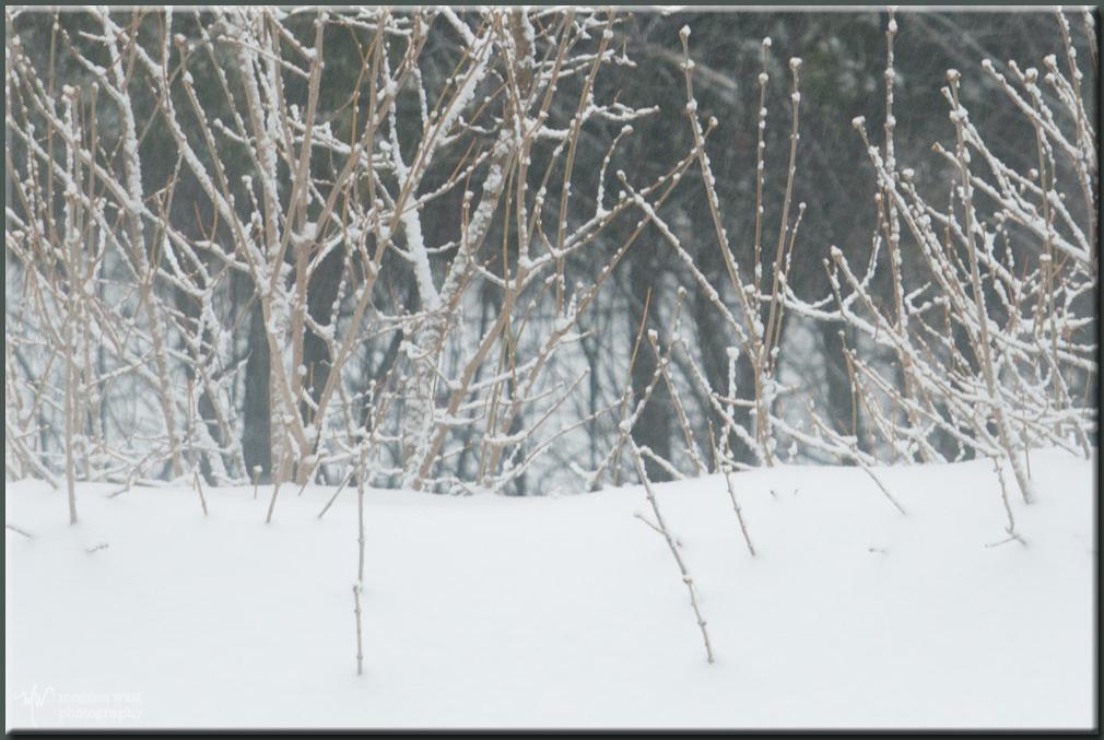 TLR-20180416-along M22 April Snow-5775