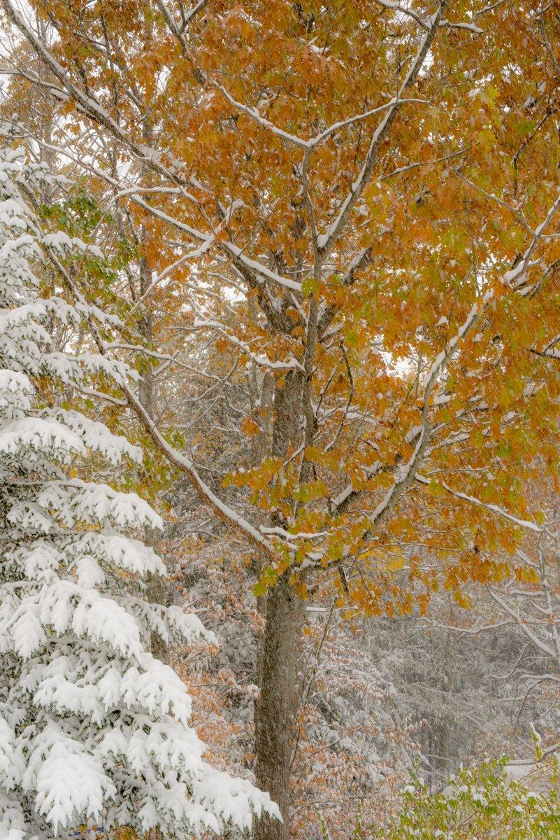 Veterans Day 2019 Snow Fall-5294