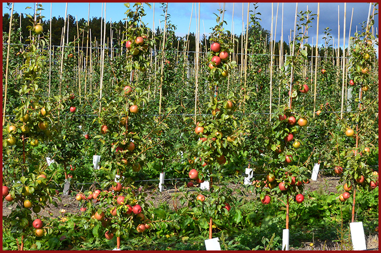 Apples10-9-16