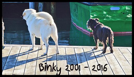 Binky8-17-16