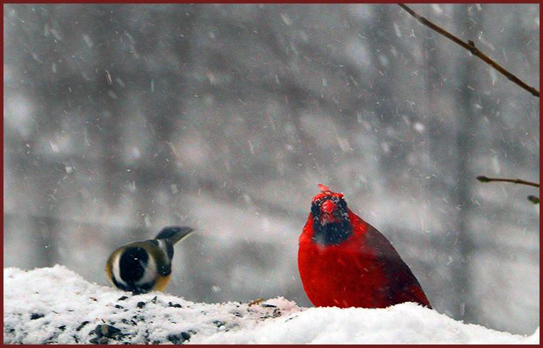 Birds1-19-16