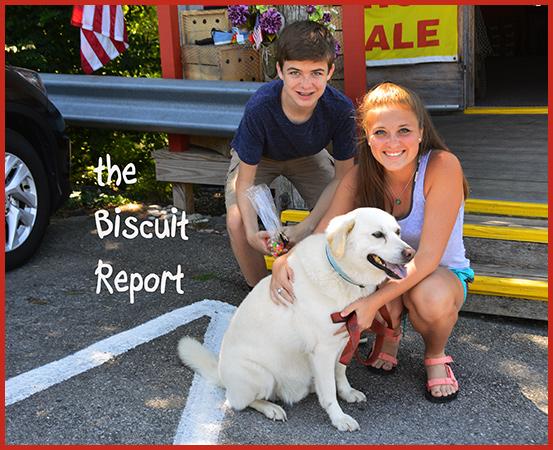 Biscuit-7-23-16