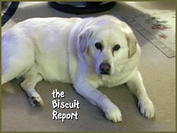 Biscuit1-24-18
