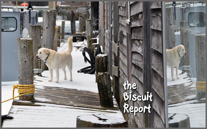 Biscuit1-29-17
