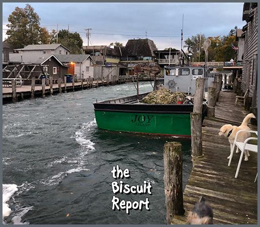 Biscuit10-11-18
