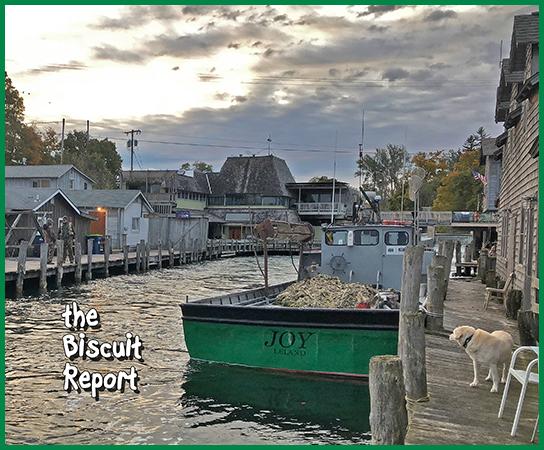 Biscuit10-16-18