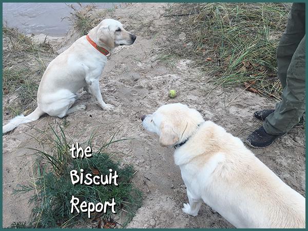 Biscuit10-24-16