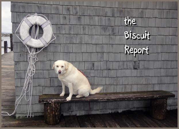 Biscuit11-12-2015