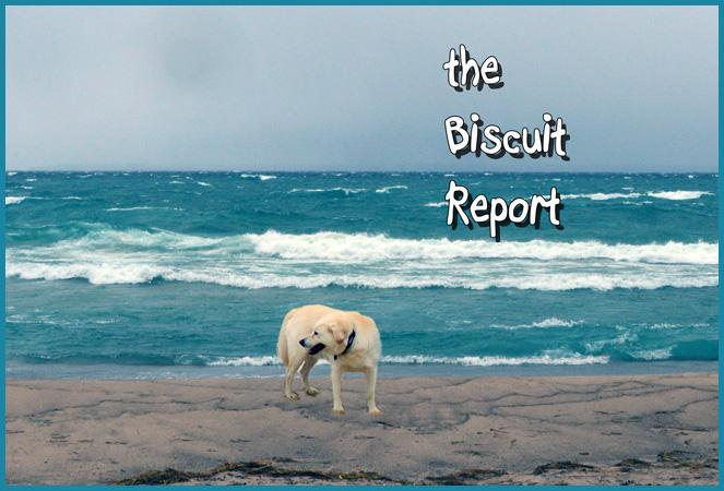 Biscuit11-13-2015