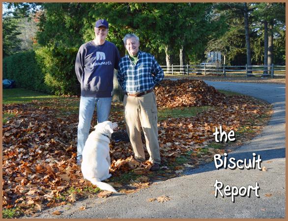 biscuit11-16-2015