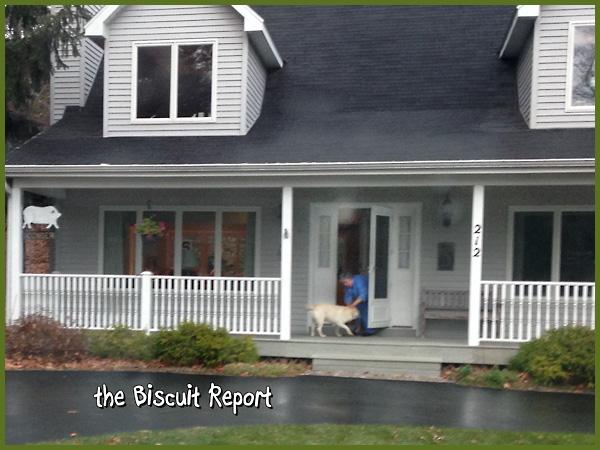 biscuit11-18-2015