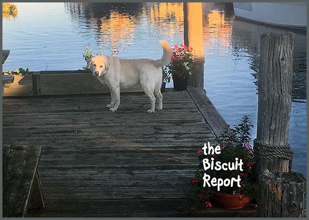 Biscuit11-21-17