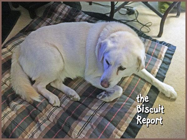 Biscuit11-30-17