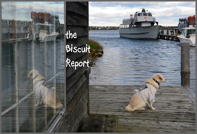 Biscuit11-4-16