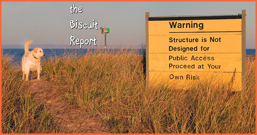 Biscuit11-5-16