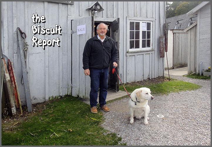 Biscuit11-6-17