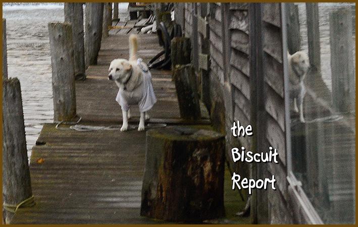 Biscuit11-8-16