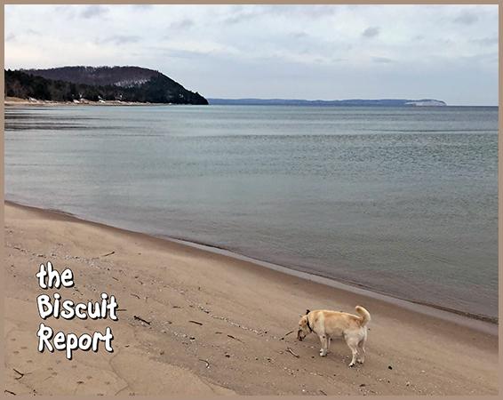 Biscuit12-12-18