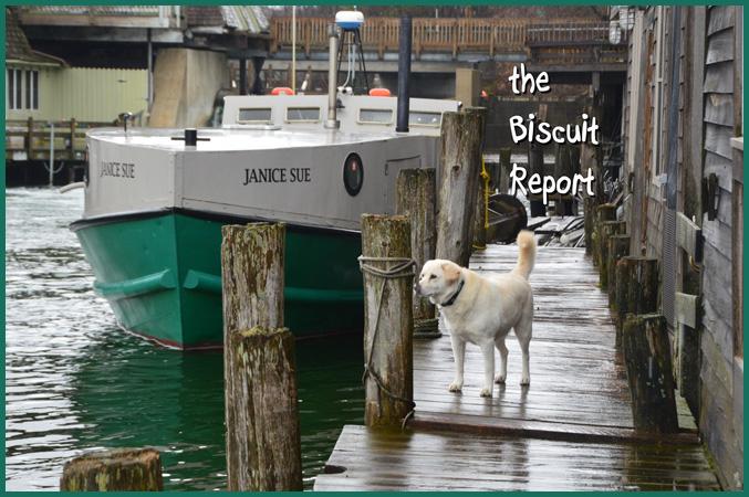 Biscuit12-14-15