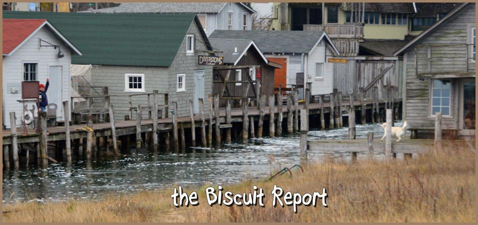Biscuit12-2-15
