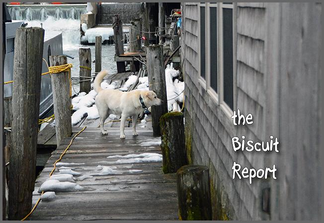Biscuit12-30-16