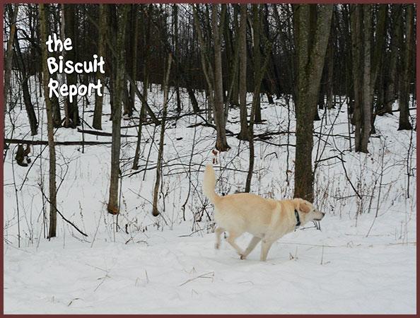 Biscuit2-12-17