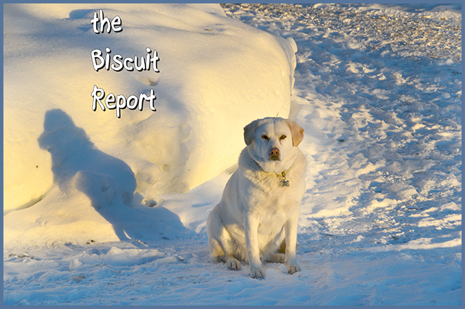 Biscuit2-18-16