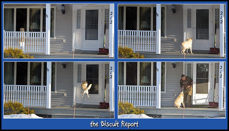 Biscuit2-27-16