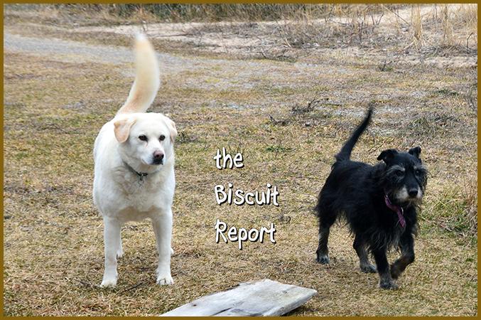 Biscuit3-10-16