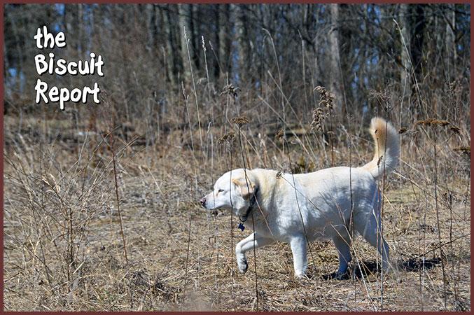 Biscuit3-16-17