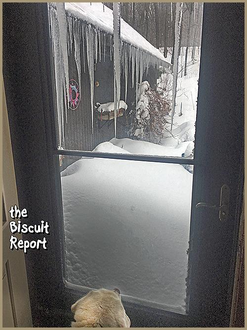 Biscuit4-15-18