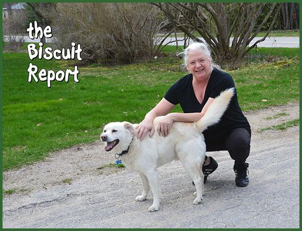 Biscuit4-26-14-17