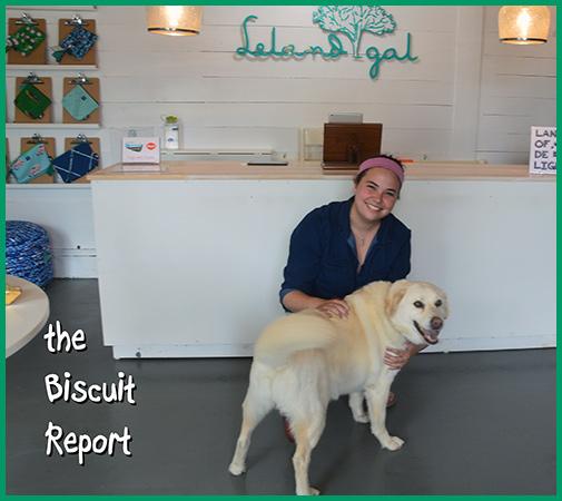 Biscuit5-29-16