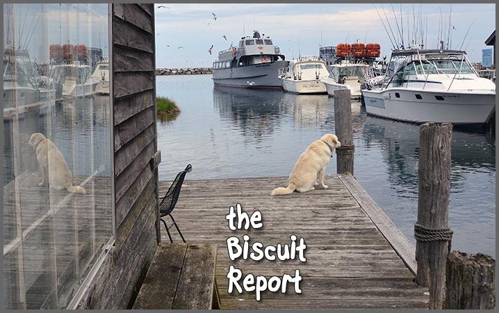 Biscuit5-29-17