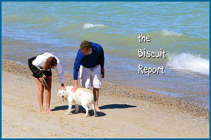 Biscuit6-12-16